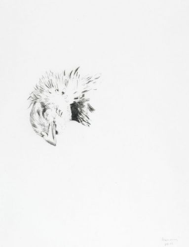 Cabeça de ave