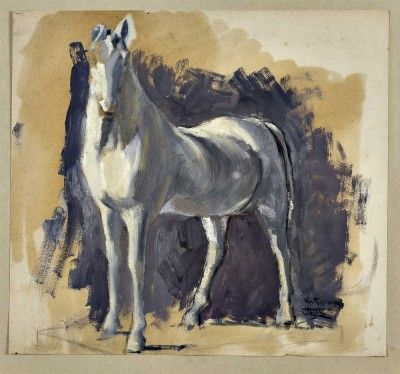 Cavalo - Estudo
