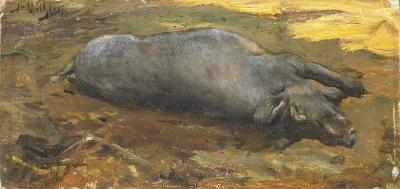 a Morte do Porco