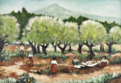 Campo de oliveiras